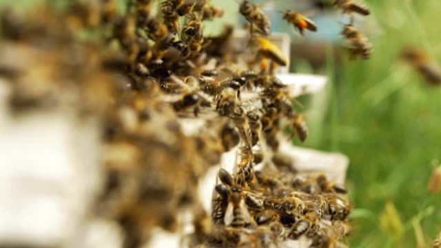 Bees landing at home