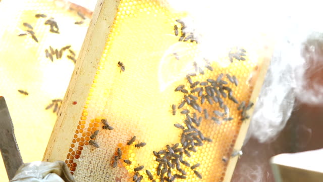 bees on honeycomb frame