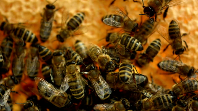 HD: Bees On The Honeycomb