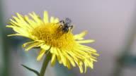 Bees take nectar