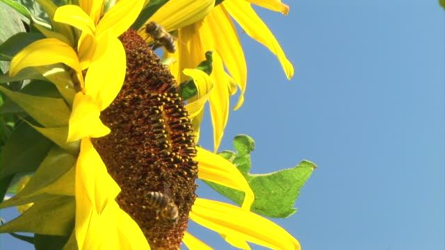 HD: Bees