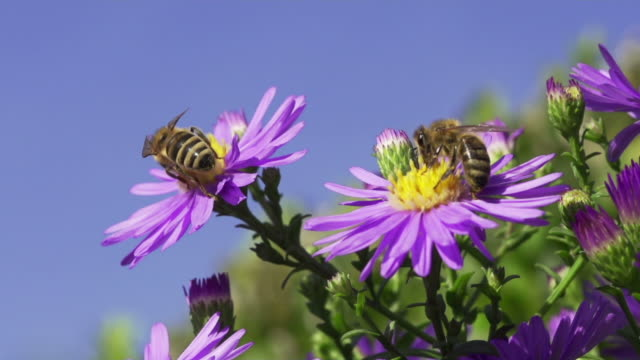 SLOW MOTION: Bees