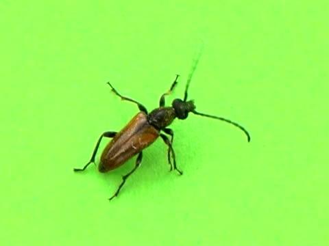 PAL: Beetle