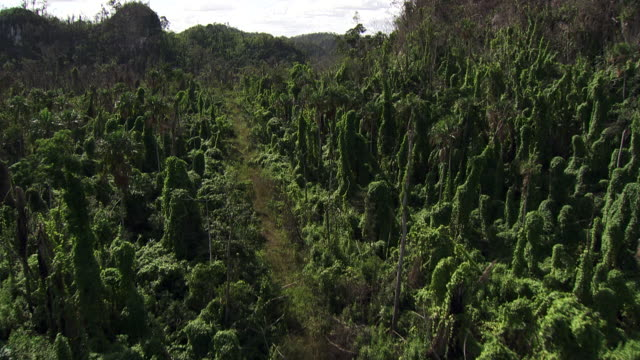 Belize: Rainforest jungle