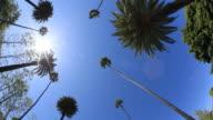 Beverly Hills - HD Video