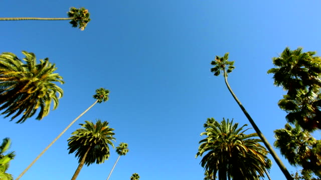 Beverly Hills HD Video