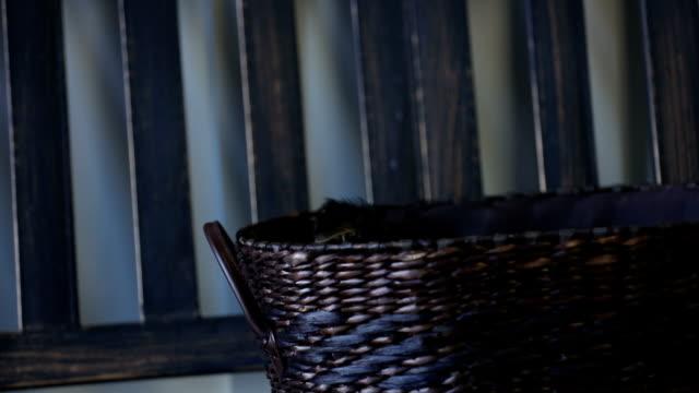 Bichon Yorkie puppy in basket