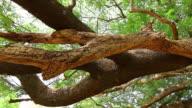Big branch