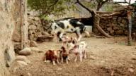 Big Pig Family