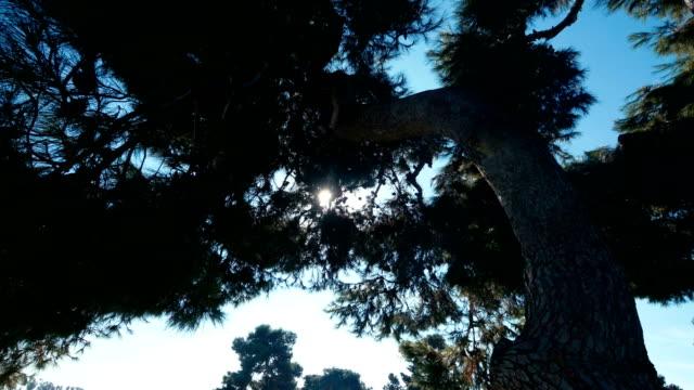 Big tree in motion 4k