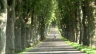 WS Bike moving on tree lined path avenue / Krummin/Usedom,  Mecklenburg Western Pomerania, Germany