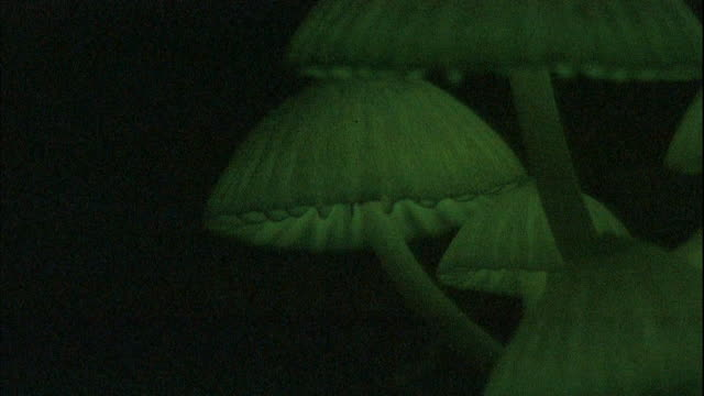 Bioluminescent mushrooms glow in a forest.