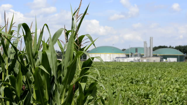 Biomasse Energie Pflanze hinter einem cornfield Energiewende Biogas fahren