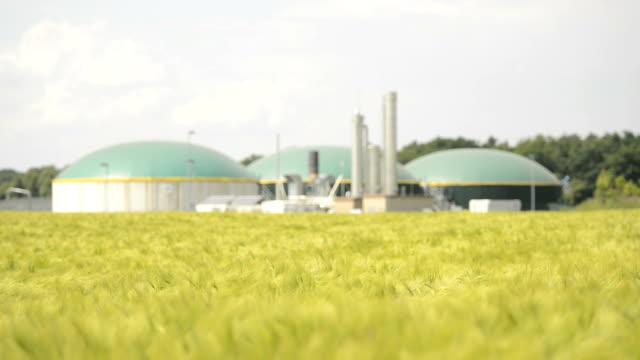 Biomasse Energie Pflanze hinter einem Weizen Feld Energiewende Biogas fahren