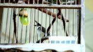 Bird cages in Thailand