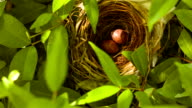 Bird egg in the nest