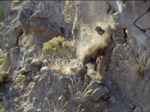 A bird flies away narrowly avoiding a rockslide.
