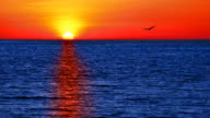 Uccello volo per il sole