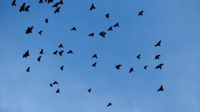 Vogel fliegt mit blauer Himmel