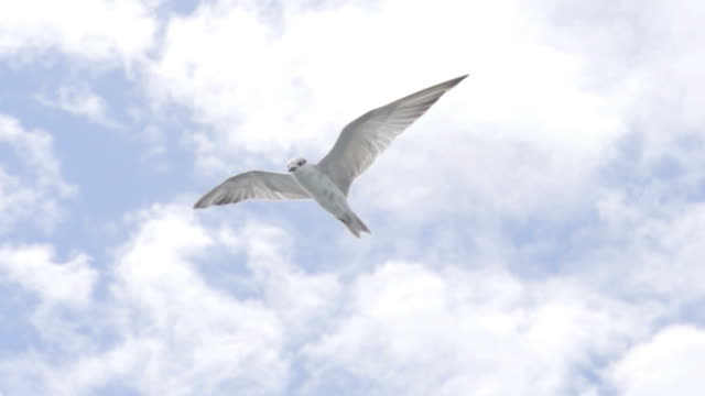 Bird Freedom Fly (Super Slow Motion)