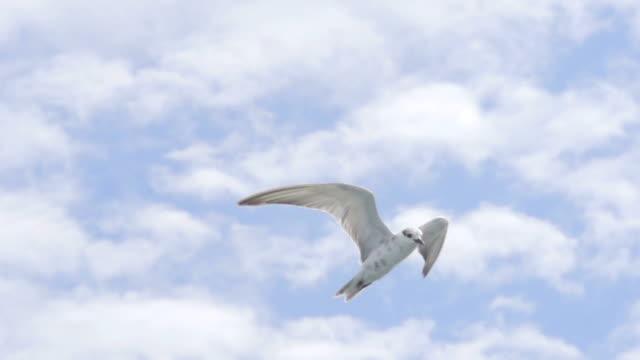 Bird Freedom Fly (Super Slow Motion)