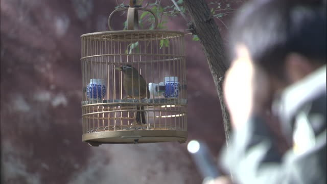 Bird hops around in small cage hanging from tree in park, Beijing.