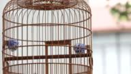 CU Bird in bamboo cage  / Hong Kong, China
