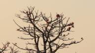Bird in morning