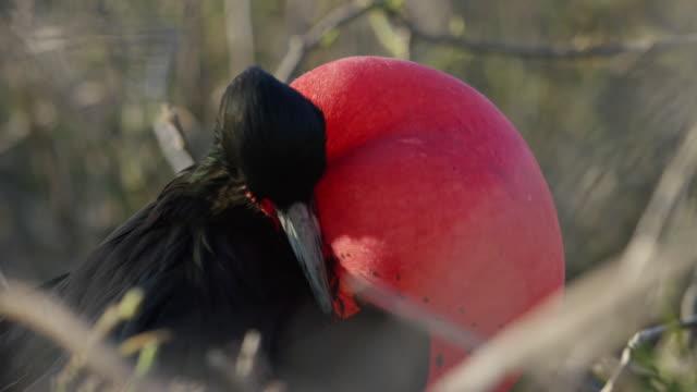 Bird in the Galapagos