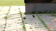 vogel springen op lopen weg
