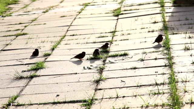 bird jump on walk way