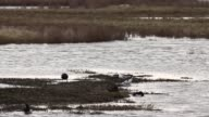 Bird Life At Elmley Marshes on April 07 2013 in Sheerness England