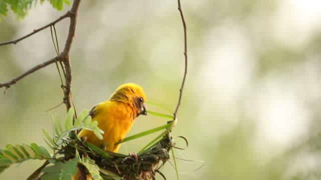 Bird making bird's nest on the tree