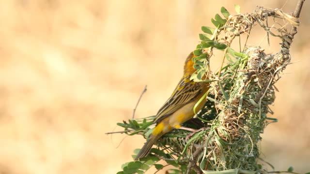 Bird making bird's nest