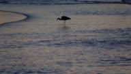 Vogel am Ufer mit einem Fisch