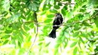 Vogel auf dem Baum