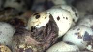 Vogel aus Ei