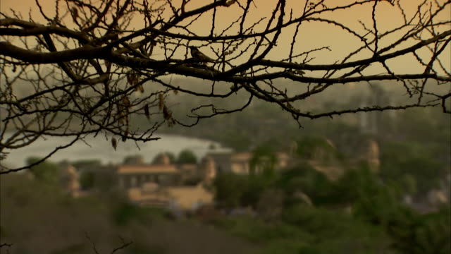 A bird perches on a tree near Jaipur, India. Available in HD