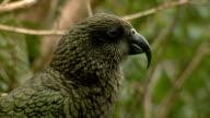 Bird #5