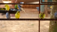ิbird