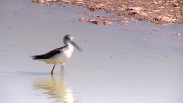 A bird walking in a water hole/ Etosha National Park/ Namibia