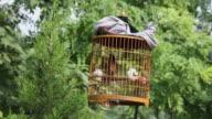 PAN LS Birdcages in park/xian,shaanxi,China