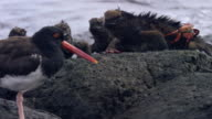 Birds and Iguanas in the Galapagos