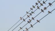 Uccelli e le guide.