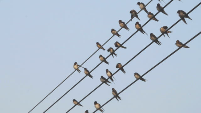 Birds and wires.