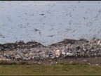 Birds at the Landfill