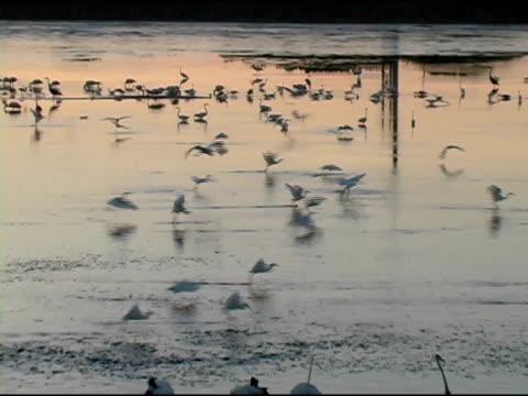 Birds Feeding at Dawn