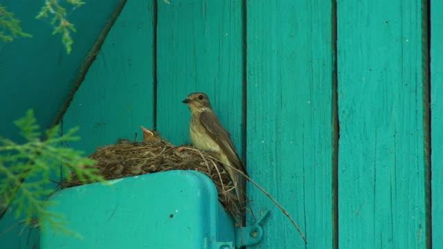 Vögel Füttern die eingebettet