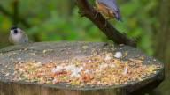 Birds Feeding.