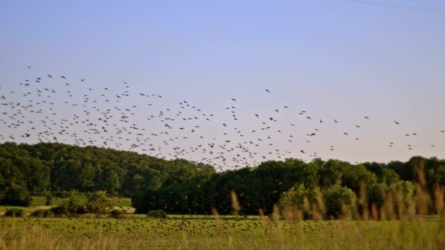 SLO, MO, Vögel fliegen über die Landschaft